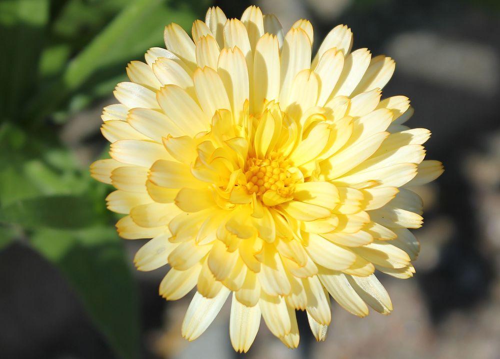 www.floramyno.com - Accueil